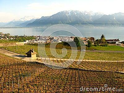 Vineyards of Vevey Switzerland