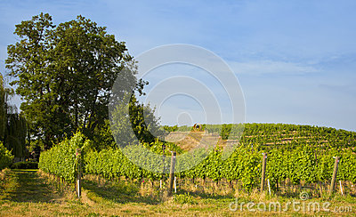 Vineyards, Walla Walla Wine Country, Washington
