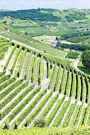 Vineyars, Piedmont, Italy