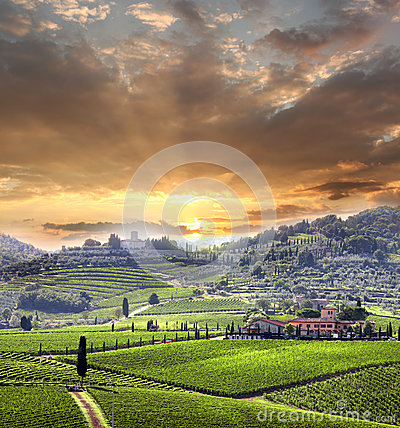Free Vineyeard In Chianti, Tuscany, Italy, Famous Lands Royalty Free Stock Photo - 29109275