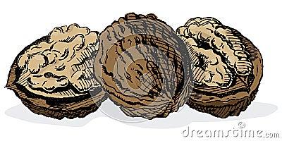 Vintage 1950s Walnuts