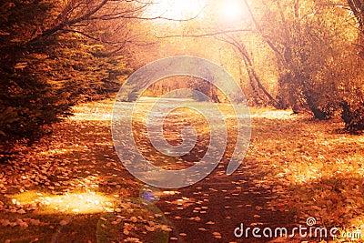 Vintage Autumn Path