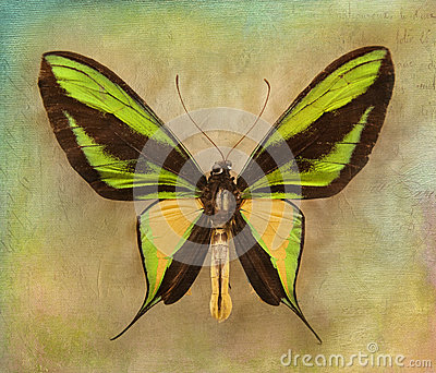 Vintage background with butterfly