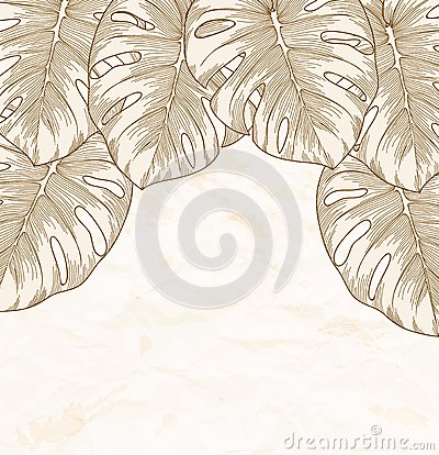 Free Vintage Background. Old Crumpled Paper With Leaves Monstera With Outline In The Corner. Royalty Free Stock Photography - 33356167