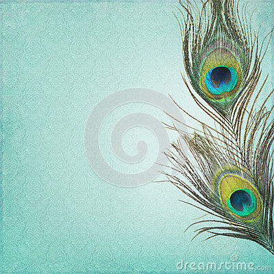 Free Vintage Background With Peacock Feathers Stock Photo - 40703430