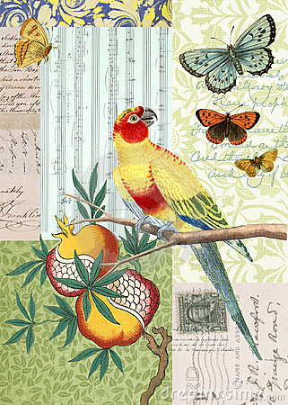Vintage Bird and Butterfly Postcard Collage