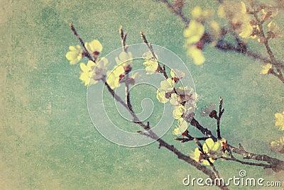 Vintage cherry blossom