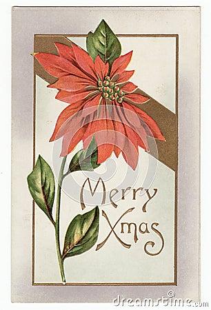 Vintage Christmas Poinsettia Postcard