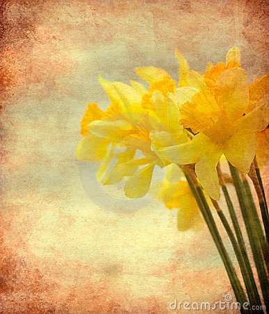 Free Vintage Daffodil Flowers Royalty Free Stock Photo - 19348005