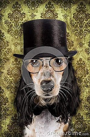 Vintage dog