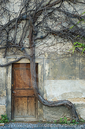 Vintage door and old crooked tree