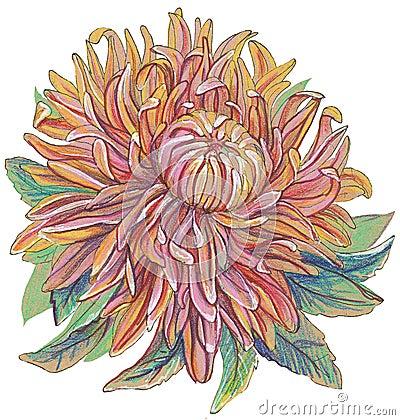 Vintage drawing of flowers