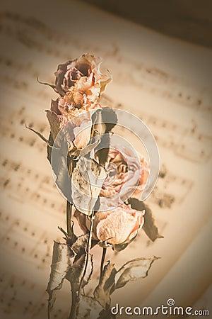 Vintage dry Flowers on music