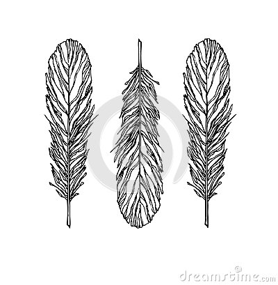 Vintage Feather vector set - Illustration. Sketch