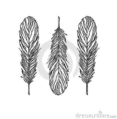 Vintage Feather vector set - Illustration. Sketch