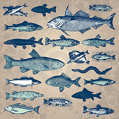 Free Vintage Fish Set (vector) Stock Photos - 14334303