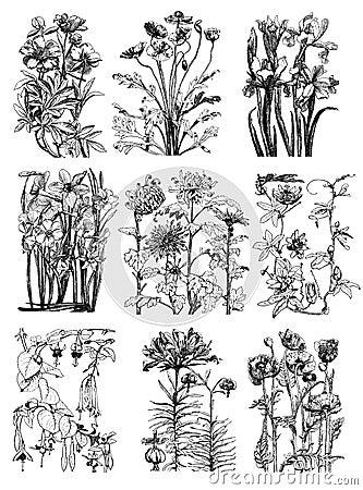 Vintage floral Botanical Flower Drawings