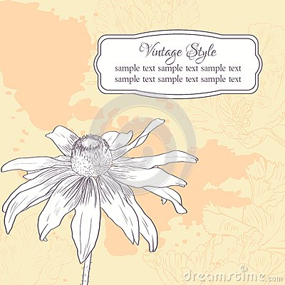 Vintage floral card with chamomile