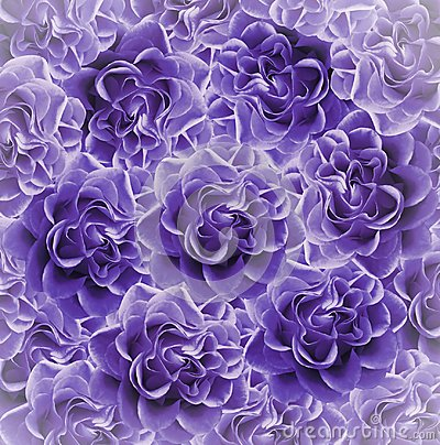 Free Vintage Floral  Purple Beautiful Background.  Flower Composition. Bouquet Of Flowers From  Violet Roses. Close-up. Royalty Free Stock Photos - 113022378
