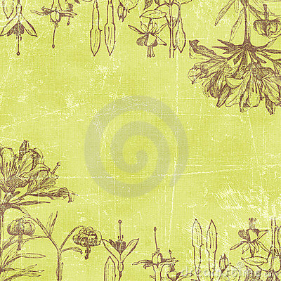 Vintage Florals Botanical Paper Background