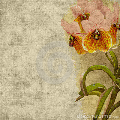 Free Vintage Flower Scrapbook Background Stock Photo - 5392940