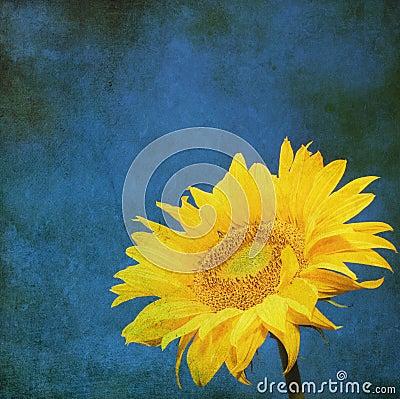 Free Vintage Image Of Sunflower On Grunge Background Stock Photos - 16441293