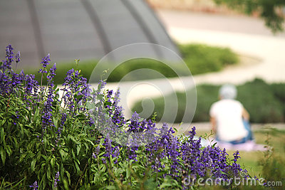 Ravishing Formal Lavender Herb Garden Royalty Free Stock Image  Image  With Fetching House And Garden Feed Chart Besides Garden Centre Chester Le Street Furthermore Romsey Water Gardens With Appealing Hay Bail Gardening Also Garden Statuary Uk In Addition Garden Sheds In Swansea And Possible Location Of The Garden Of Eden As Well As Pret A Manger Covent Garden Additionally Landscape Gardener Job Description From Dreamstimecom With   Fetching Formal Lavender Herb Garden Royalty Free Stock Image  Image  With Appealing House And Garden Feed Chart Besides Garden Centre Chester Le Street Furthermore Romsey Water Gardens And Ravishing Hay Bail Gardening Also Garden Statuary Uk In Addition Garden Sheds In Swansea From Dreamstimecom