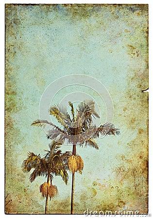 Vintage Palm Postcard