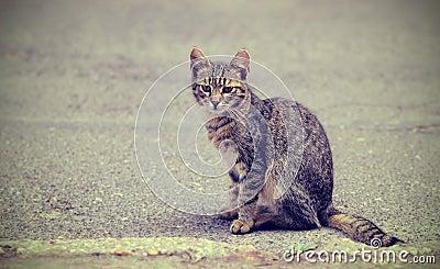 Vintage photo of a kitten on the street