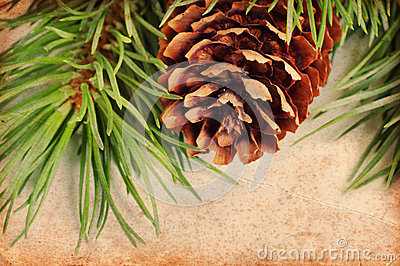 Vintage pine branch