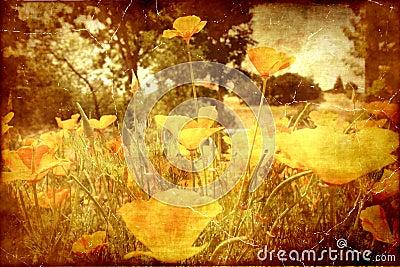 Vintage Poppies