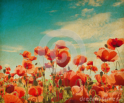 poppy field against blue sky.