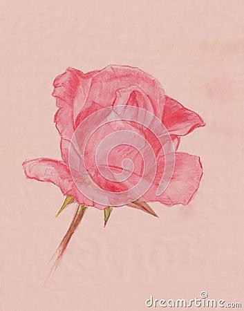 Vintage Rose Drawing R...