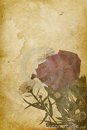 Vintage Rose Imprint Background