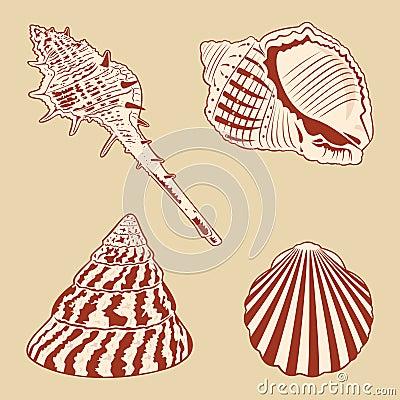 Vintage Shells Set.
