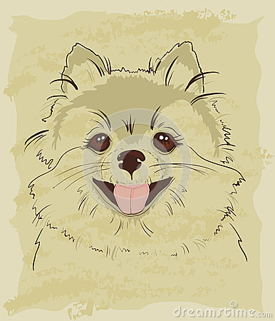Vintage sketch of cute spitz dog