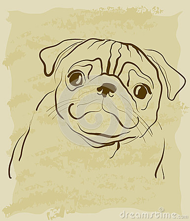 Vintage sketch of pug dog