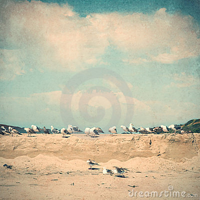 Vintage style beach picture with seagulls