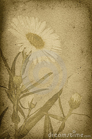Vintage Style Daisy Imprint Background