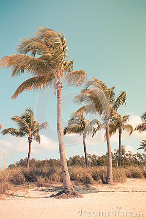 Free Vintage Style Palms Royalty Free Stock Photos - 71075858