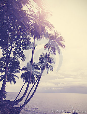 Free Vintage Stylized Tropical Beach With Palm Tree At Sunset Royalty Free Stock Photography - 43358777