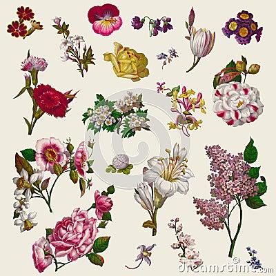 Free Vintage Victorian Flowers Clip Art Stock Image - 36675971