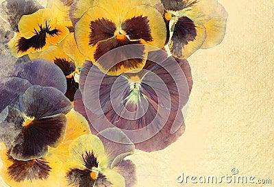 Vintage viola flowers background