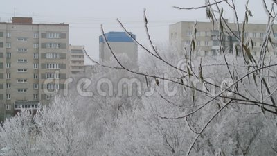 Vinterträd som täckas med fallande snö för frost vita röda stjärnor för abstrakt för bakgrundsjul mörk för garnering modell för d stock video