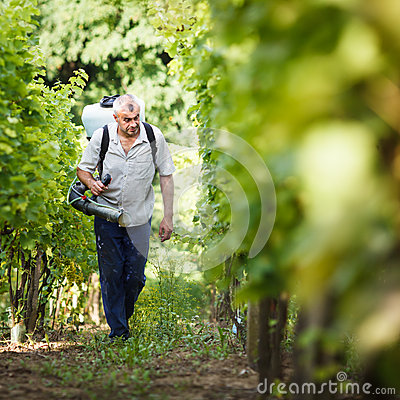 Vintner  in his vineyard spraying chemicals