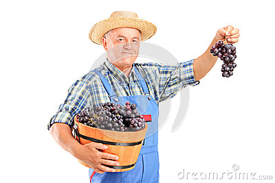 Vintner holding a basket full of grapes
