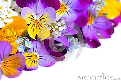 Viola flowers border