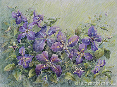 Violet clematis