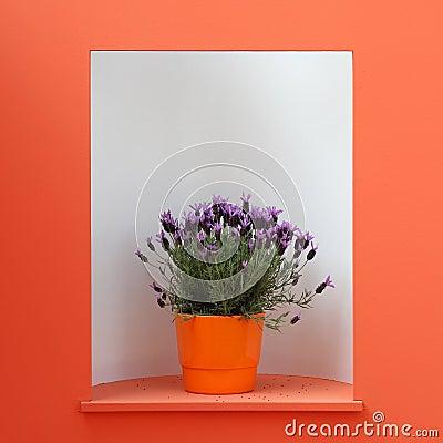 Violet decoration flower in orange pot
