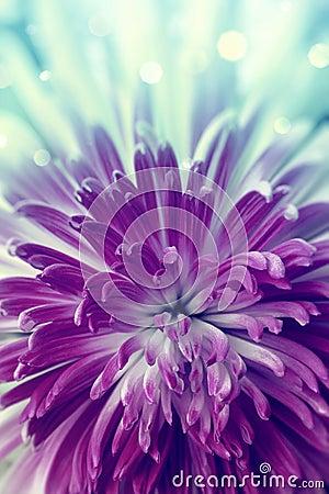 Free Violet Flower Stock Image - 26136101